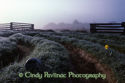 Meadow Labyrinth Fog Dawn