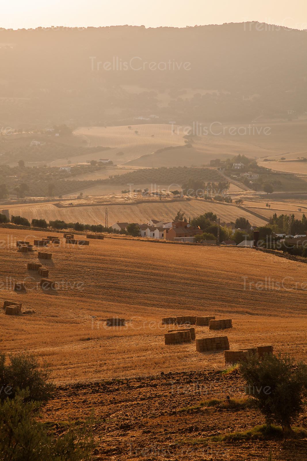 Hay fields on cultivated land in Ronda, Spain