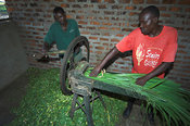 Lusi Community Orphans project, Kenya. Cutting napier grass into smaller peices for cattle to eat