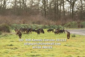 107__KSB_Kennels_Exercise_161212