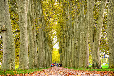 Tree alley - Fall season