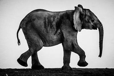 03809-The_acrobat_elephant_Namibie_2017_Laurent_Baheux