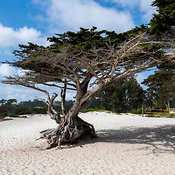 Carmel By the sea photos