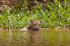 jaguar_reed_bath-11