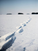 Tracks on frozen sea