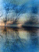 Beautiful Blue Abstract Landscape | Photography | Trees Reflected in Water