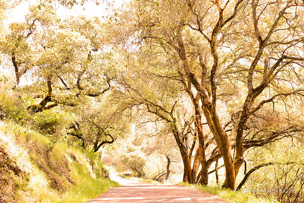 COUNTRY ROAD NAPA VALLEY