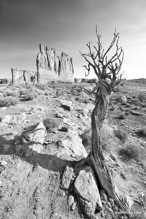 THE ORGAN COURTHOUSE TOWERS ARCHES NATIONAL PARK UTAH BLACK AND WHITE VERTICAL