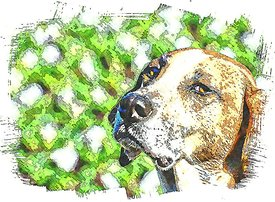 Travis_the_dog_illustration