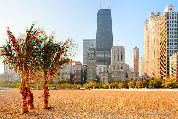 PALM TREES ON OAK STREET BEACH AT THE LAKEFRONT IN DOWNTOWN CHICAGO
