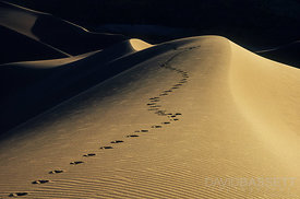 Meandering Coyote Tracks | Great Sand Dunes National Park, CO