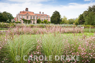 Newly created beds of Miscanthus sinensis 'Kleine Silberspinne' and Gaura lindheimeri 'Rosyjane' with standard birches. Heale House, Middle Woodford, Salisbury, Wilts, UK