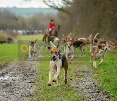 The Belvoir Hunt at Kimberley Farm 28/1 photos