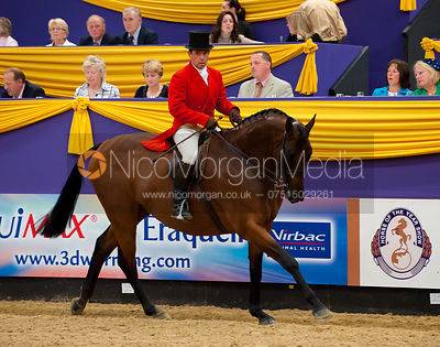 HOYS Middleweight Hunter photos