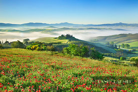 Tuscany landscape in fog with poppy field in front of Podere Belvedere - Europe, Italy, Tuscany, Siena, Val d'Orcia, San Quirico d'Orcia - digital