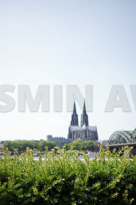 Cologne Catherdral and the rhine in the background, green hedge in front. Lots of copy space