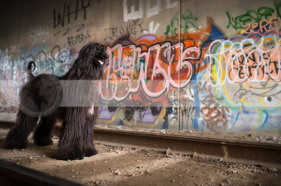 black longhaired dog standing in urban graffiti train tunnel