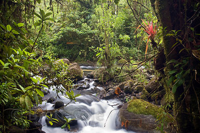 Classic rainforest scene along the Rio Penas Blancas, Las Nubes, Costa Rica