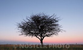 The tree and a Sunrise