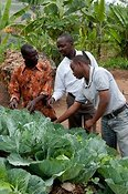 Farmer working his Keyhole Garden and showing the quality of vegetables to neighbours. Rwanda