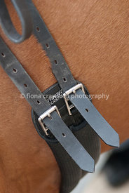Dressage girth buckles