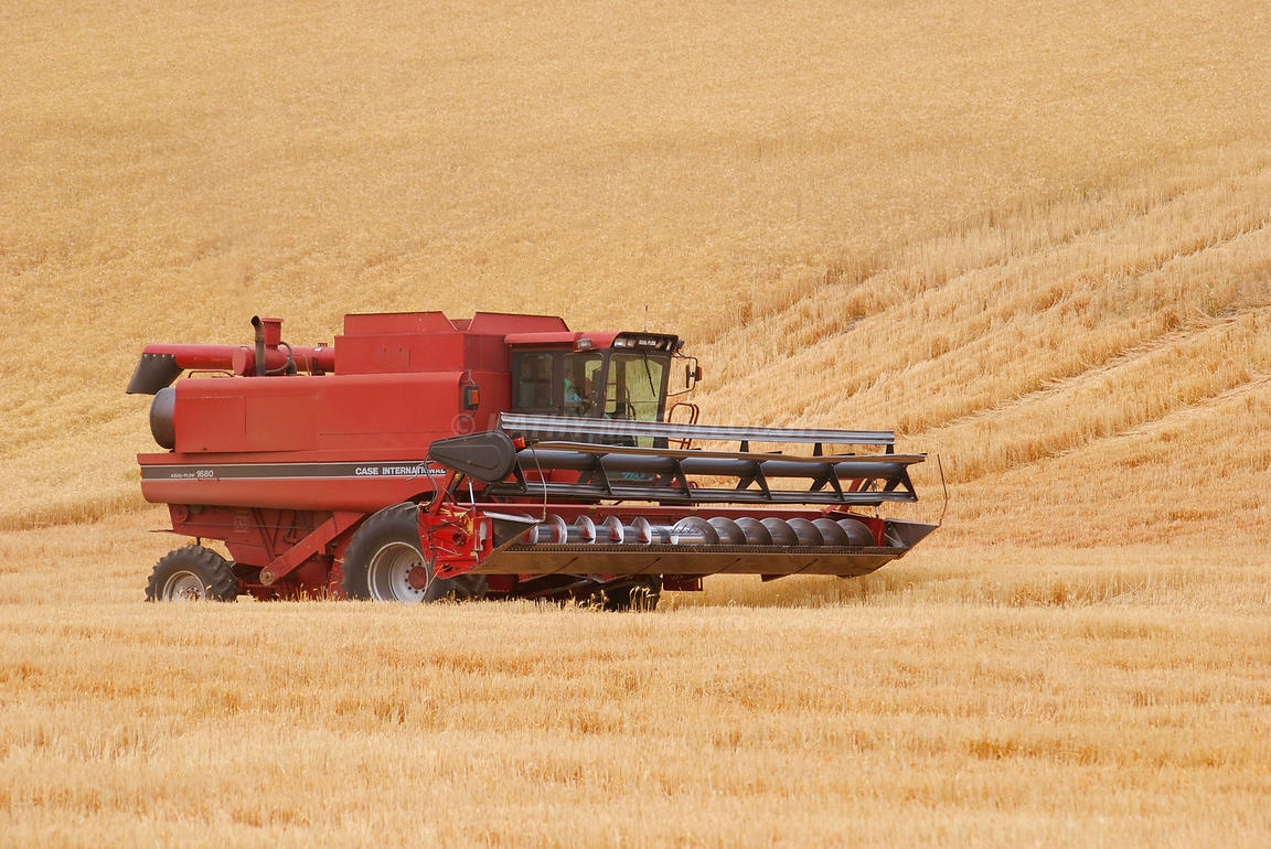 1680_combine_cutting_soft_white_winter_wheat_eastern_Oregon