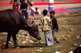 Children and a water buffalo. Varanasi, India