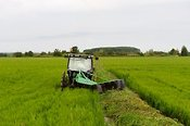 Tractor working in rice fields