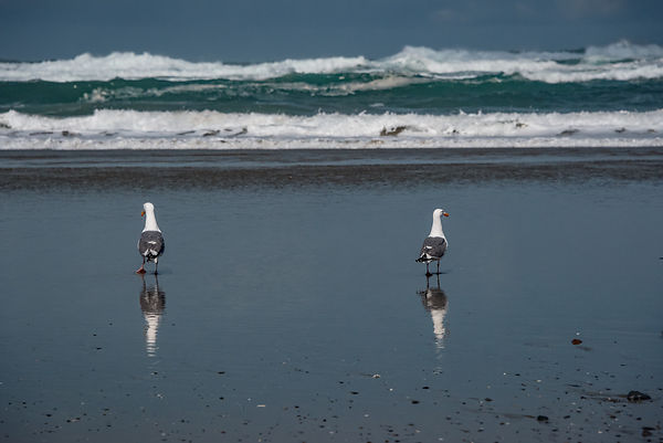 Oregon_Coast-22