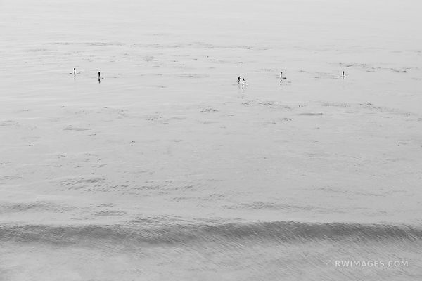 STAND UP PADDLE BOARDERS PACIFIC OCEAN COAST CALIFORNIA BLACK AND WHITE