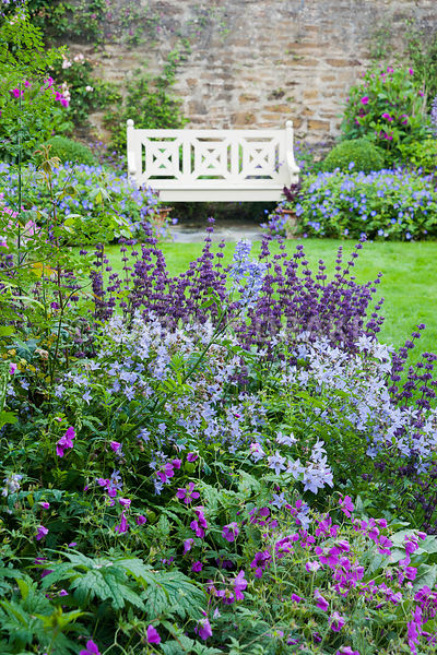 The Walled Garden planted with purples, pinks and blues including campanulas, Geranium Patricia = 'Brempat', Salvia verticillata 'Purple Rain', dahlias, galegas and Geranium Rozanne = 'Gerwat' each side of the wooden bench. Bosvigo, Truro, Cornwall, UK