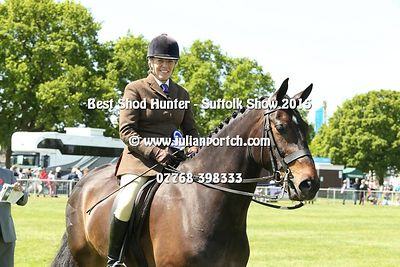 Best Shod Horse - Ridden Hunter photos