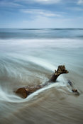 Cambois Driftwood
