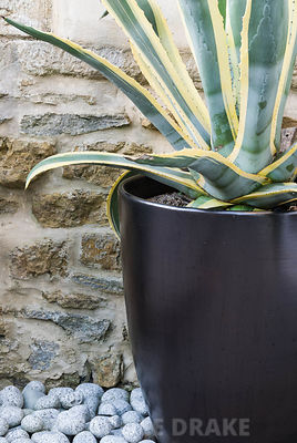 Contemporary courtyard garden designed by Amir Schlezinger. Agave americana var striata in tall black planter with pebbles around base. Private garden, Dorset, UK