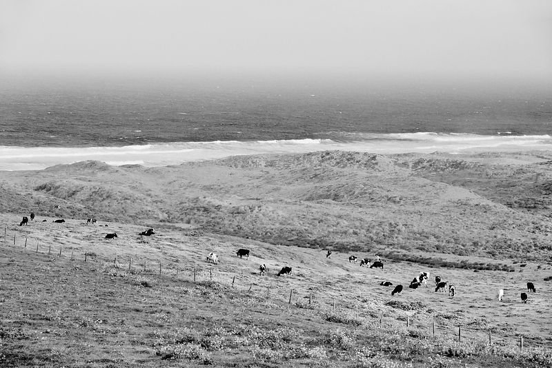 COASTAL GRASSLAND PASTURE POINT REYES NATIONAL SEASHORE CALIFORNIA BLACK AND WHITE