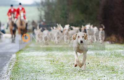 The Quorn Hunt at Eye Kettleby 7/1 photos