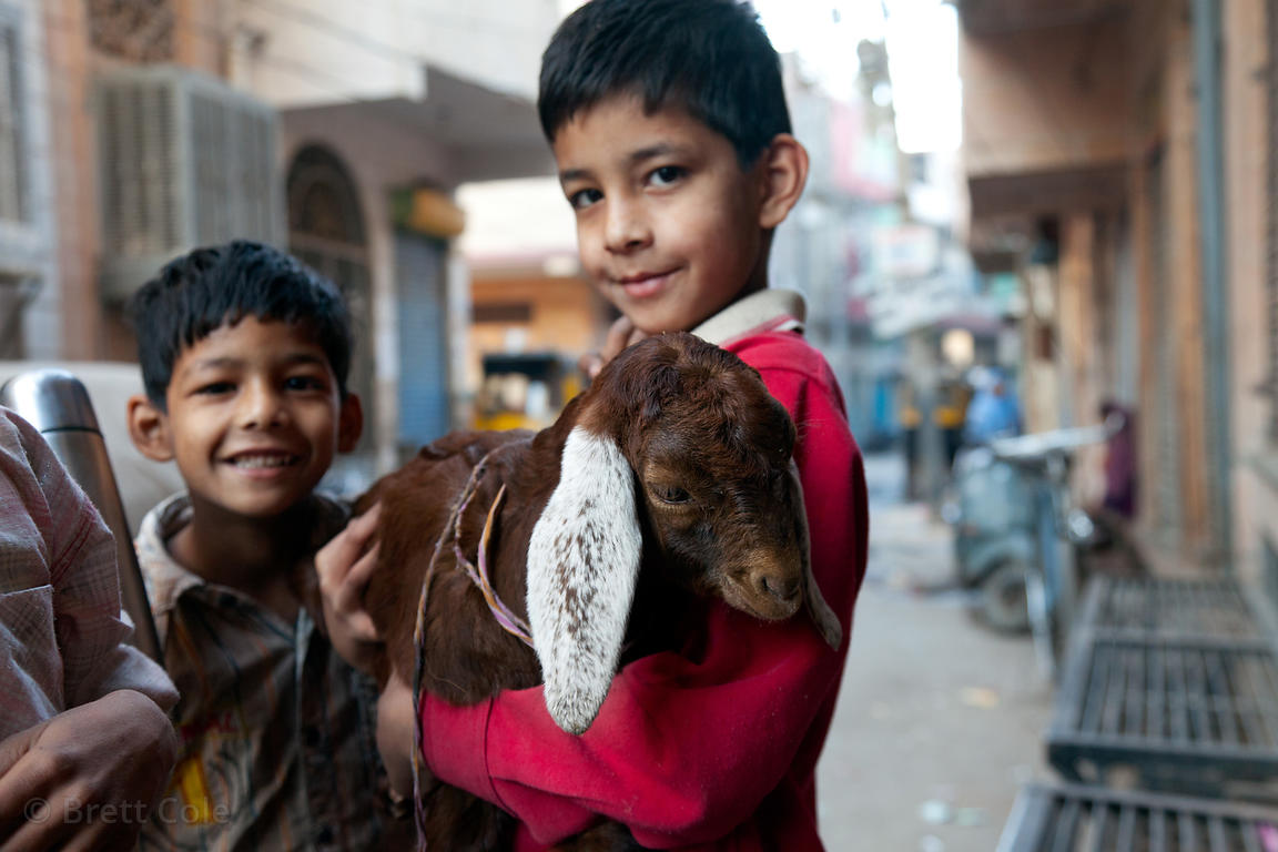 Two boys and their goat, Jodhpur, Rajasthan, India