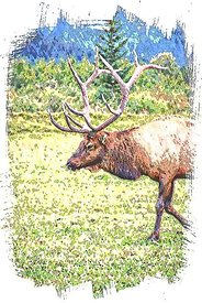 ANC_ELK_illustration