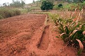 Ditches dug in hillside to help collect rainfall and prevent rapid soil erosion. Rwanda