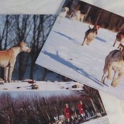 Christmas Cards photos