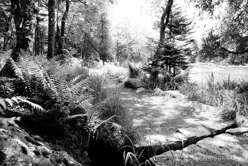 JORDAN POND PATH ACADIA NATIONAL PARK MAINE BLACK AND WHITE
