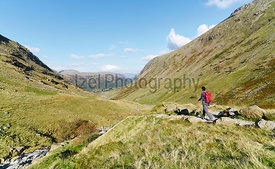 A hiker walking down towards Seathwaite, Grains Gill from Scafell Pike in the English Lake District. UK.