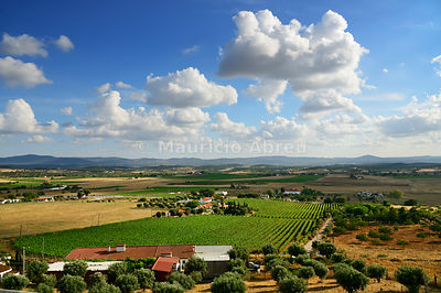 The vast plains of Alentejo with vineyards and olive trees. Estremoz, Portugal