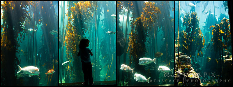 Two Oceans Aquarium, Cape Town, South Africa. A little girl looks through the glass at the Fish swimming through the kelp forest, sunlight filtering through the water in blue beams.