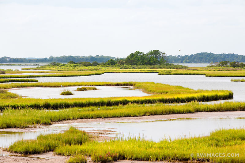 WETLANDS CHINCOTEAGUE BAY ASSATEAGUE ISLAND NATIONAL SEASHORE MARYLAND COLOR