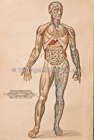 antique medical illustration - (59 of 60)