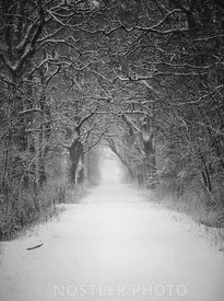 The white path