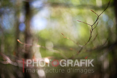 KEY WORDS: ILLUSTRATION / ABSTRACT / FOREST / f1.4