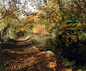 Glamorgan Canal Nature Reserve, Whitchurch, Cardiff.