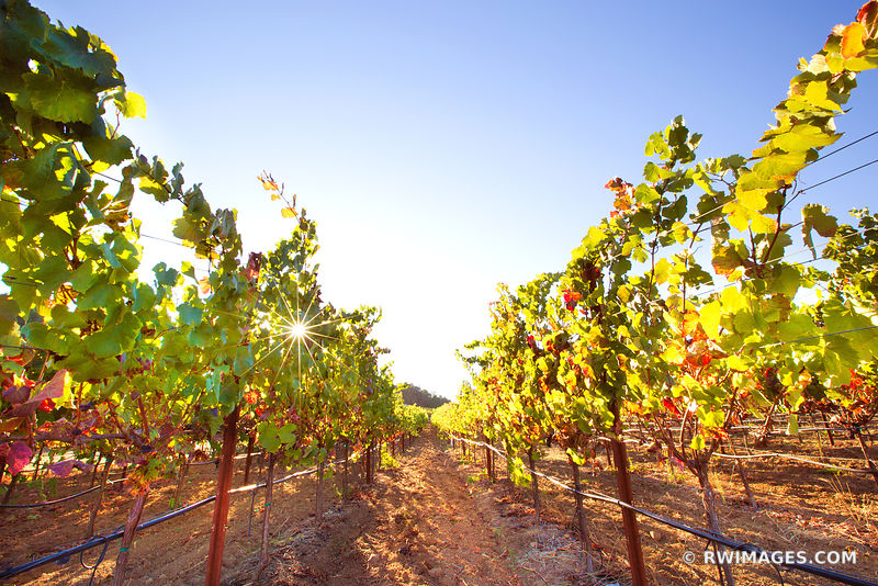 VINEYARD NAPA VALLEY CALIFORNIA WINE COUNTRY COLOR